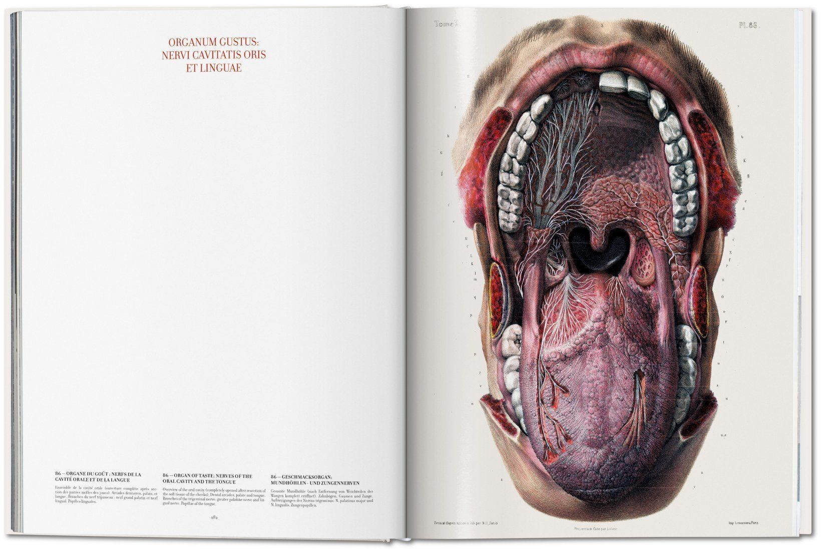 Bourgery. Atlas of Human Anatomy and Surgery (Henri Sick, Jean-Marie ...